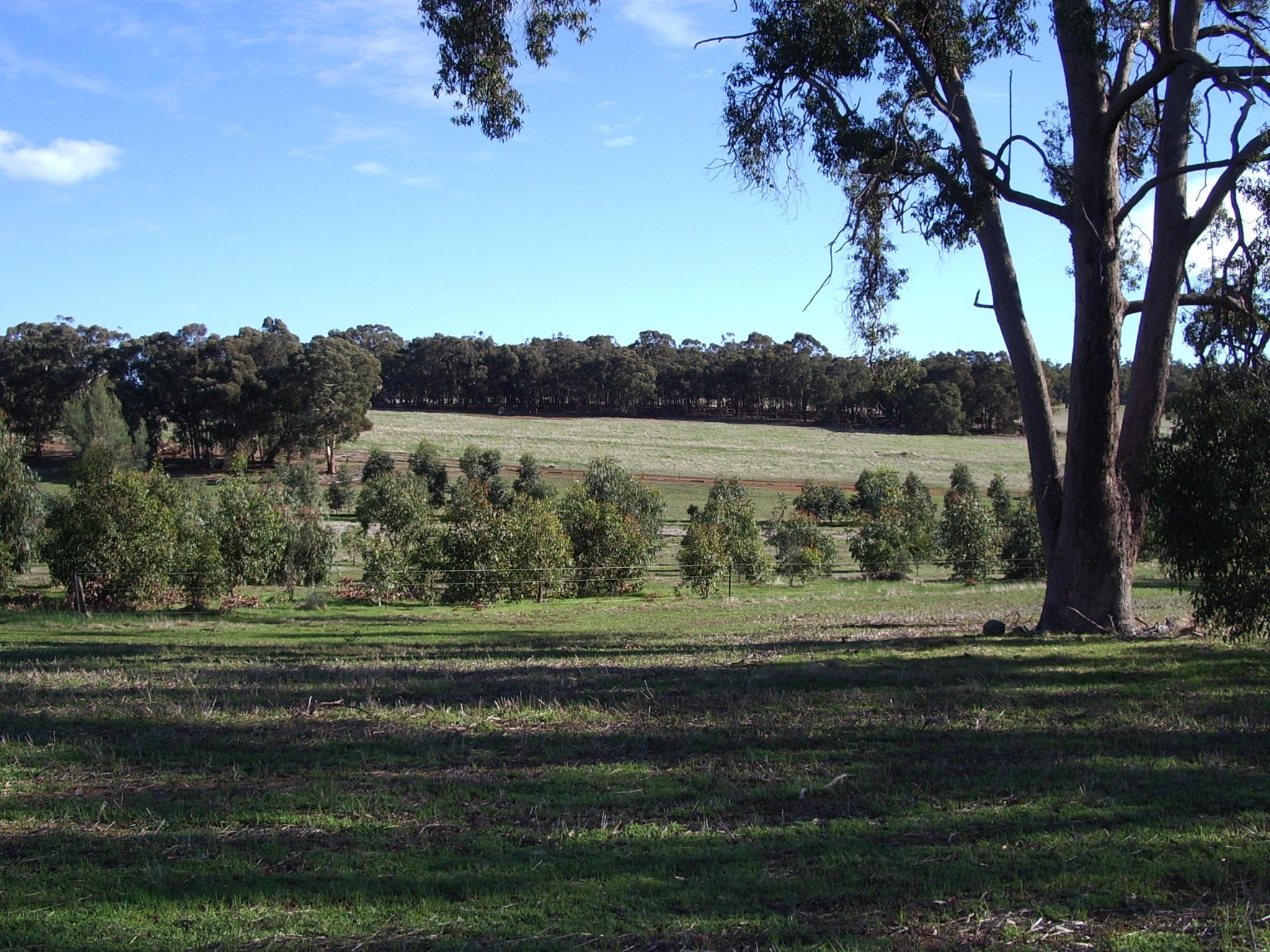 Trees 22052